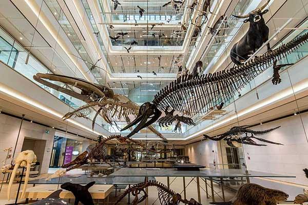 Il museo delle scienze